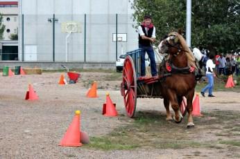 L'habilitat dels conductors dels carros era l'element clau en la competició // David Guerrero