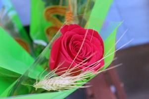 Sant Jordi 2016 Molins de Rei (26)