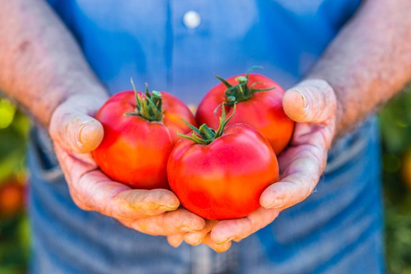 Tomatoes: a healthy and delicious alternative