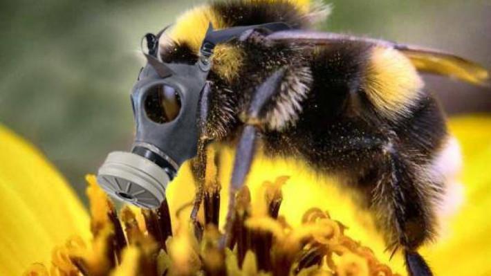 L'Union européenne interdit trois néonicotinoïdes dangereux pour les abeilles — Pesticides