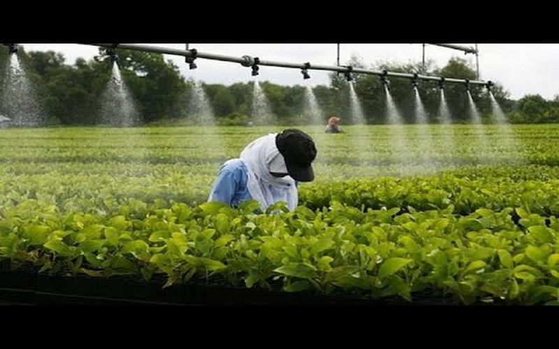 Les enjeux de l'agro-industrie en Afrique | VivAfrik - Actualité