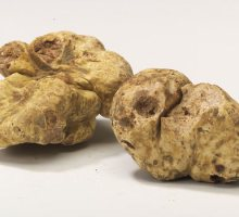 fresh white truffle