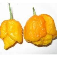 semi-di-peperoncino-trinidad-scorpion-moruga-yellow-Img_Principale_25305