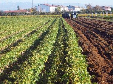 vivai-viticolo-trentini-1