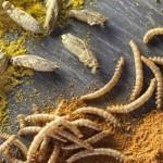 3 Recetas con Insectos. Aprende Cómo cocinar Insectos