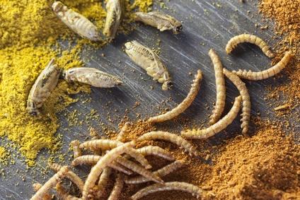Recetas con Insectos. Aprende Cómo cocinar Insectos