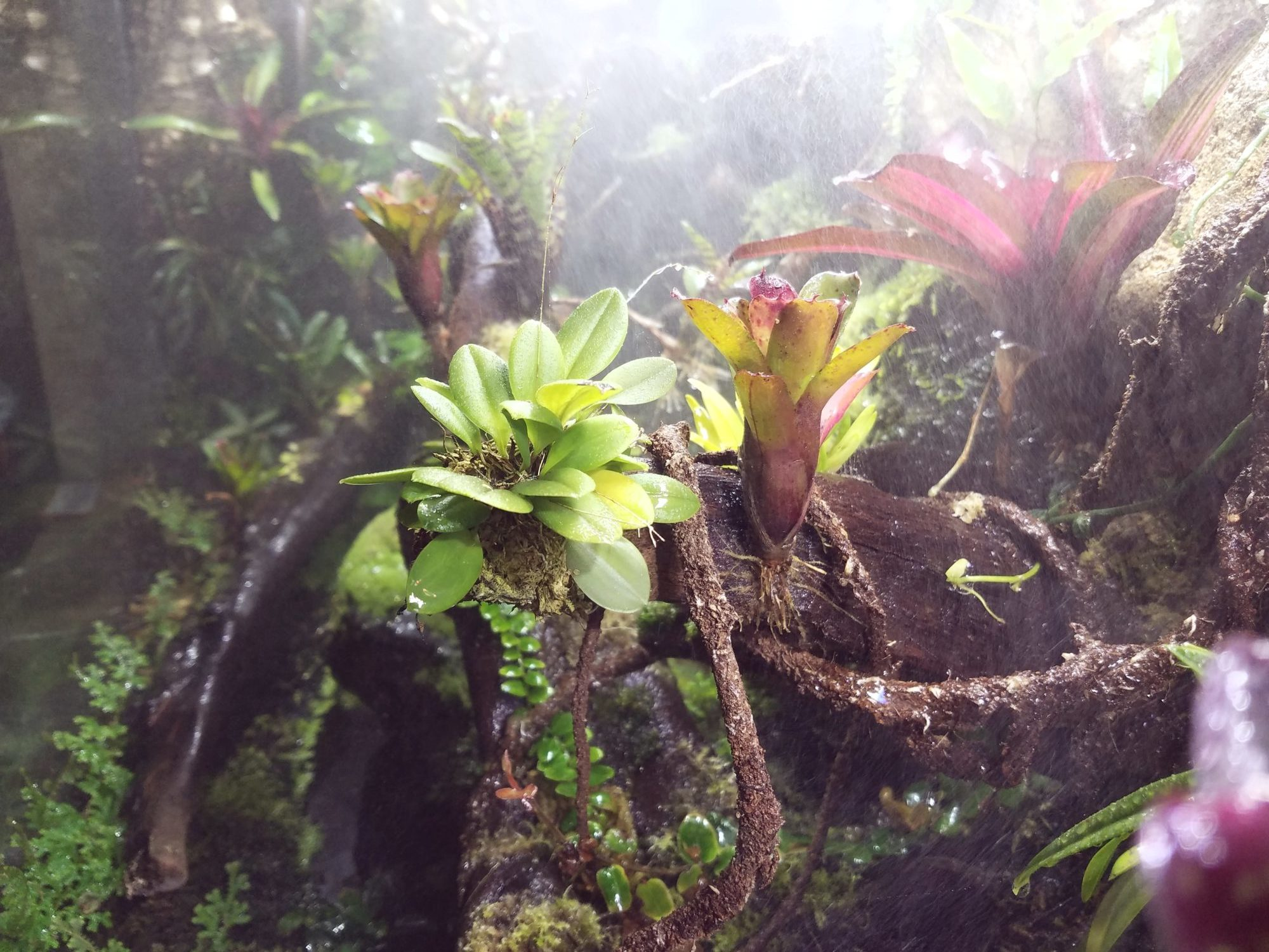 Photo Gallery Vivariums In The Mist