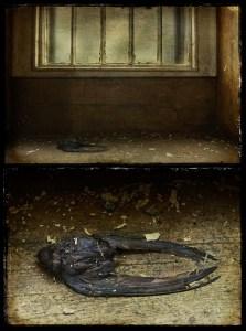 Dead Swallow on windowsill diptych, derelict Talgarth Asylum, Wales, UK