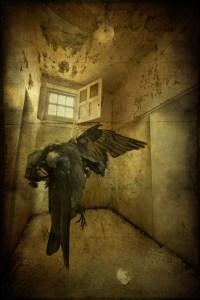 Dead bird in padded cell at derelict West Park Asylum, Epsom, Surrey
