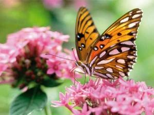 Uma borboleta é atraída pela flor e a sua beleza natural.