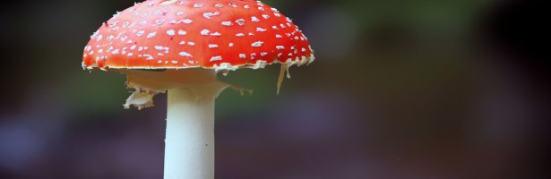 Um Cogumelo Vaidoso