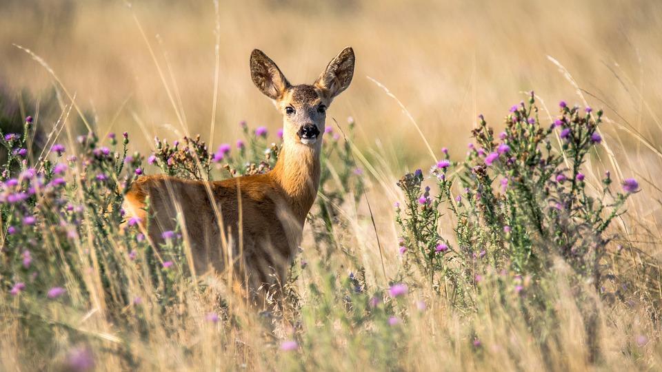 Todos nos lembramos da história do Bambi, que celebra o ciclo da vida de uma forma muito intensa.