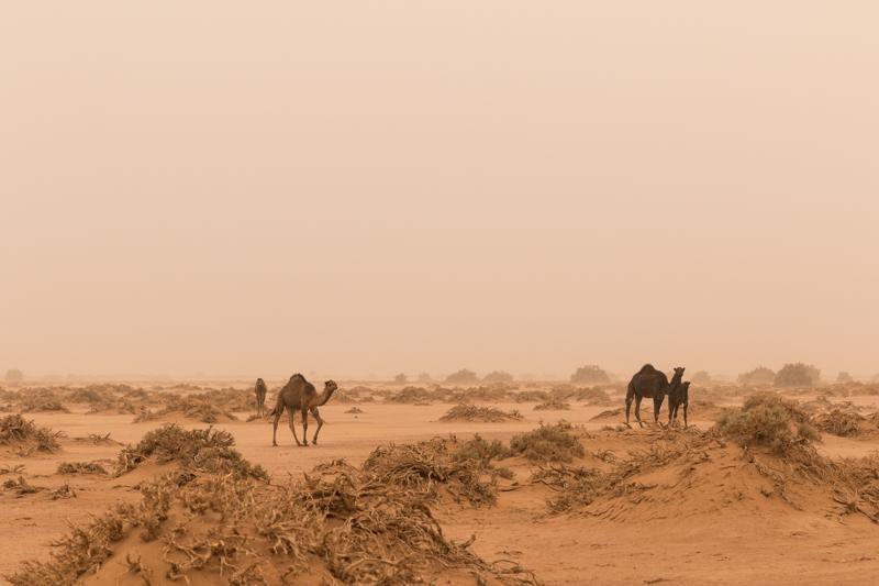 Viver a Viagem - Erg Chigaga - Marrocos - Alexandre Disaro - 90