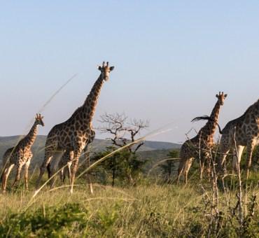 Expedição África do Sul