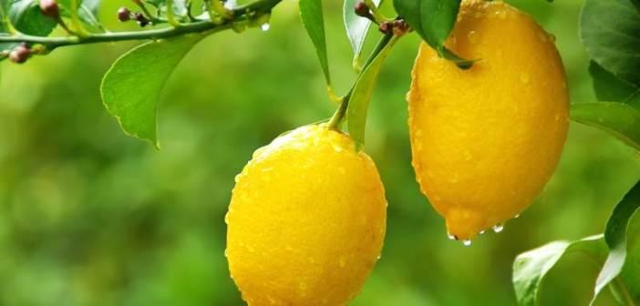 Bere acqua calda e limone al mattino a digiuno: perché fa bene?