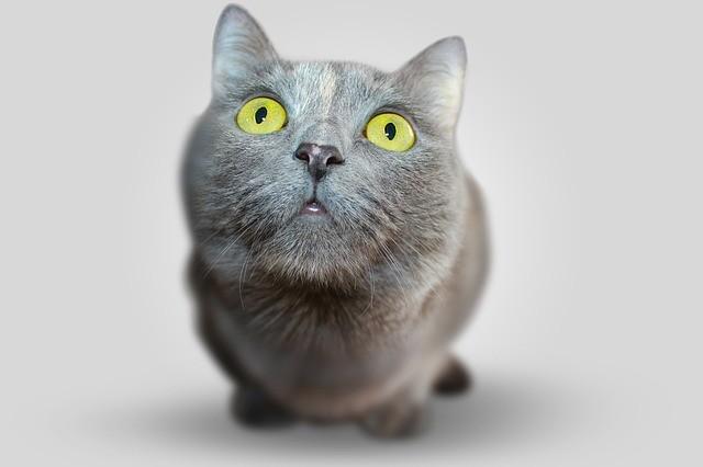 cat-351926_640
