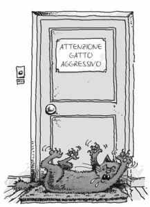 aggressione-gatto