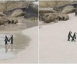 A proposito di pinguini