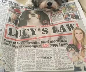 La Gran Bretagna proibirà la vendita di cuccioli di cane e gatto nei negozi di animali domestici