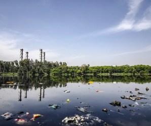 Mari e fiumi inquinati, grave danno all'ambiente e agli animali