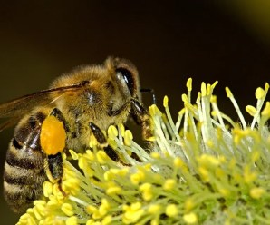Un quartiere di Londra creerà un corridoio di fiori di 11 km per aiutare a salvare le api