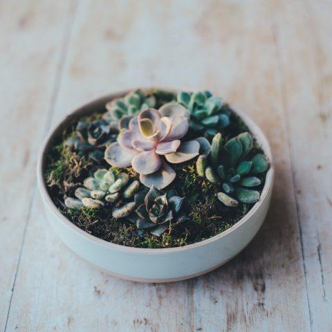 plantas-suculentas-decorar-casa-12-de-mayo-2020