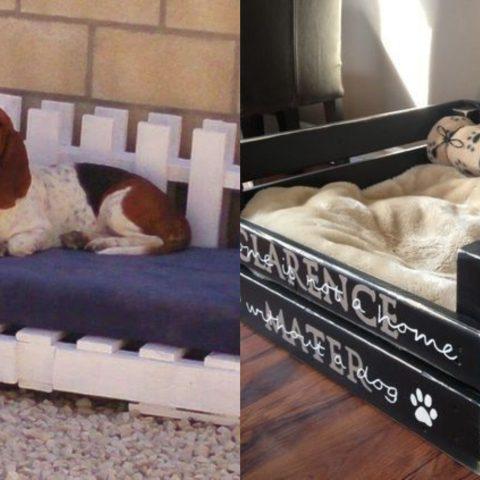 cama-para-perros-tarimas-13-de-mayo-2020
