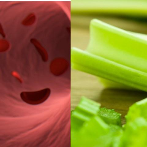 Mala-circulación-sanguínea-Conoce-5-plantas-que-ayudan-a-combatirla 18/06/20