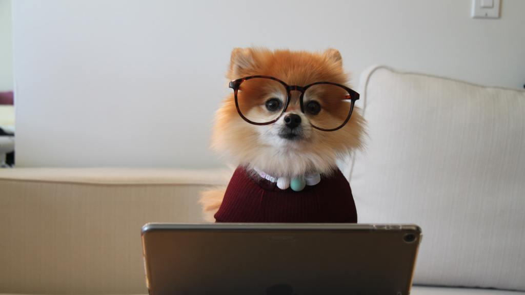 acostumbrar a perro a estar solo pomeranian-30-de-junio-de-2020
