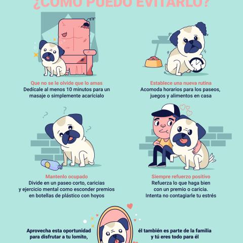 ¿Cómo ayudar si tus perros sufren de ansiedad?