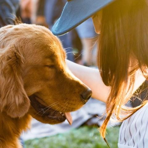 hablas-con-tu-perro-inteligente-6-de-julio-2020