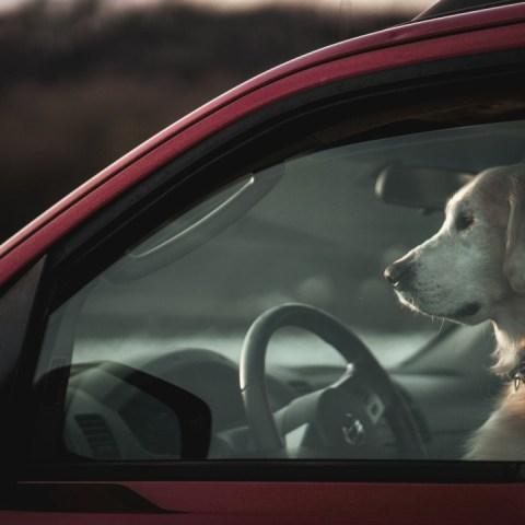 perro-encerrado-carro-13-de-julio-2020