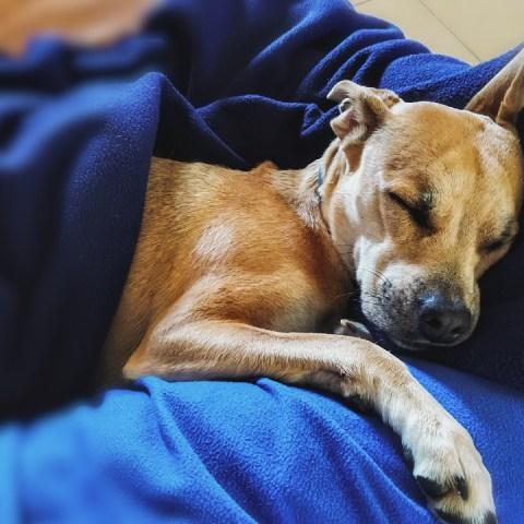 ¿Cuál es el mejor lugar para que duerma mi perro?