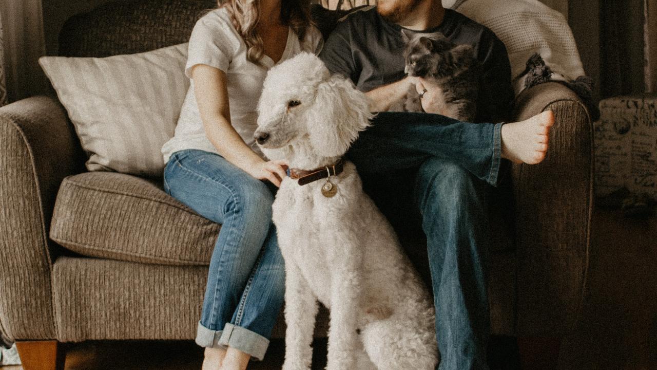 Mascotas mejoran el sistema inmunológico y protegen la salud mental de tu familia