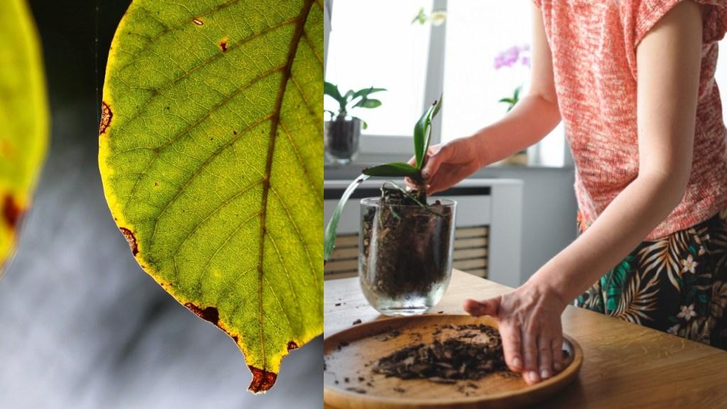 plantas hojas sequen