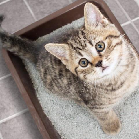 arena gato