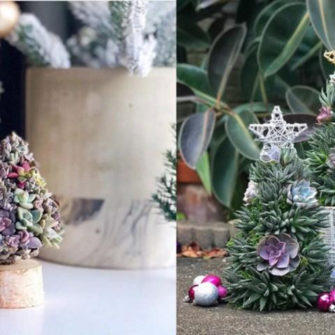 árboles navidad suculentas
