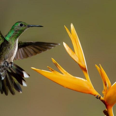 colibríes casa