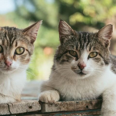 gatos psicólogos