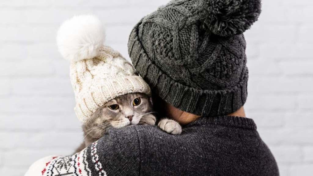consejos gato con frío