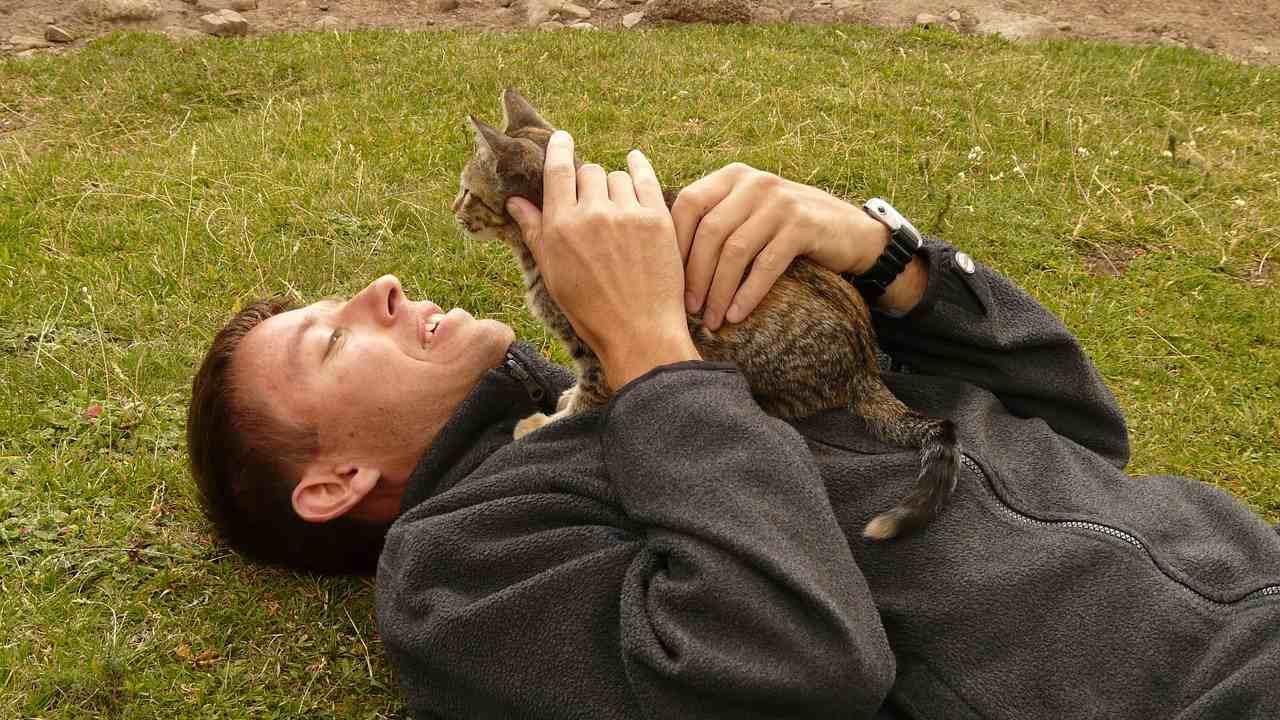 gato y persona juntos