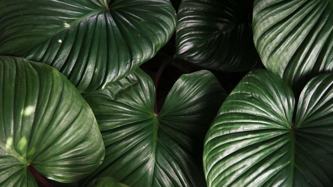 hojas de plantas limpias