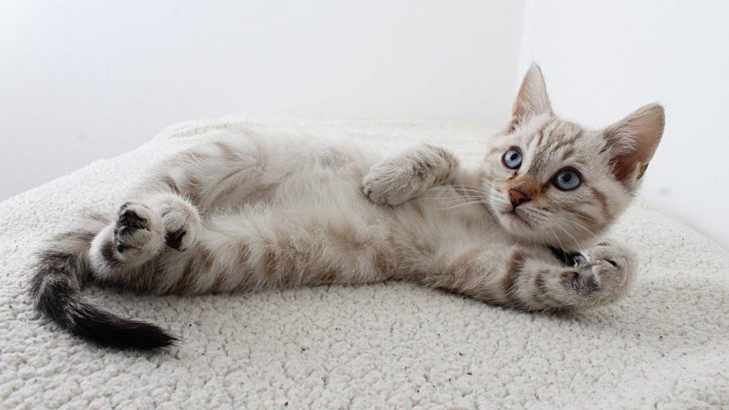 los gatos si reconocen su nombre
