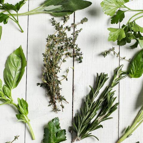 diferentes hierbas aromáticas