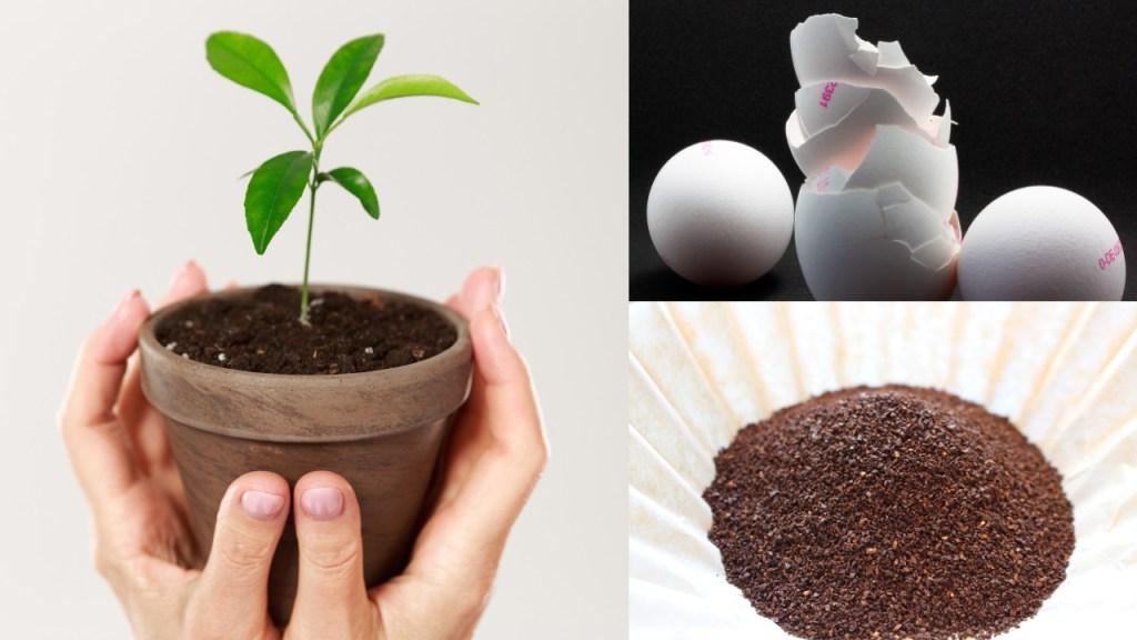abono natural para plantas