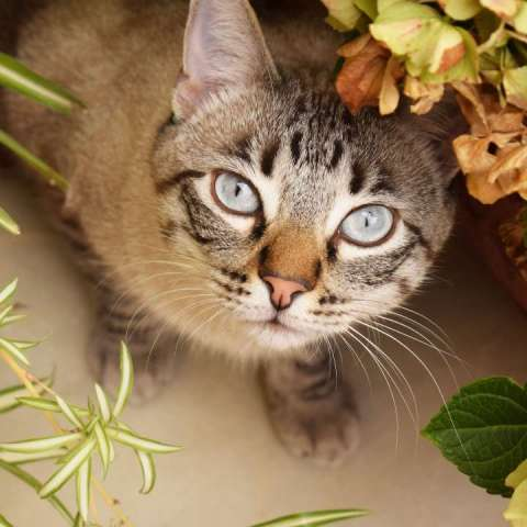 gatos entre plantas pet-friendly