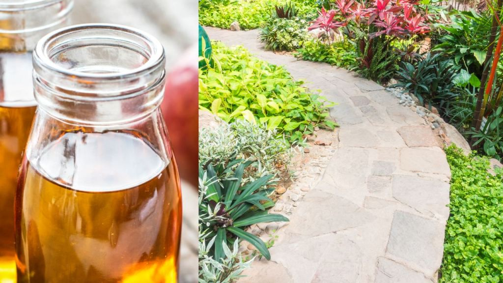 vinagre de manzana y un jardín