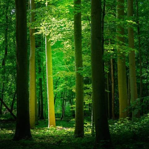 NASA Tierra más verde