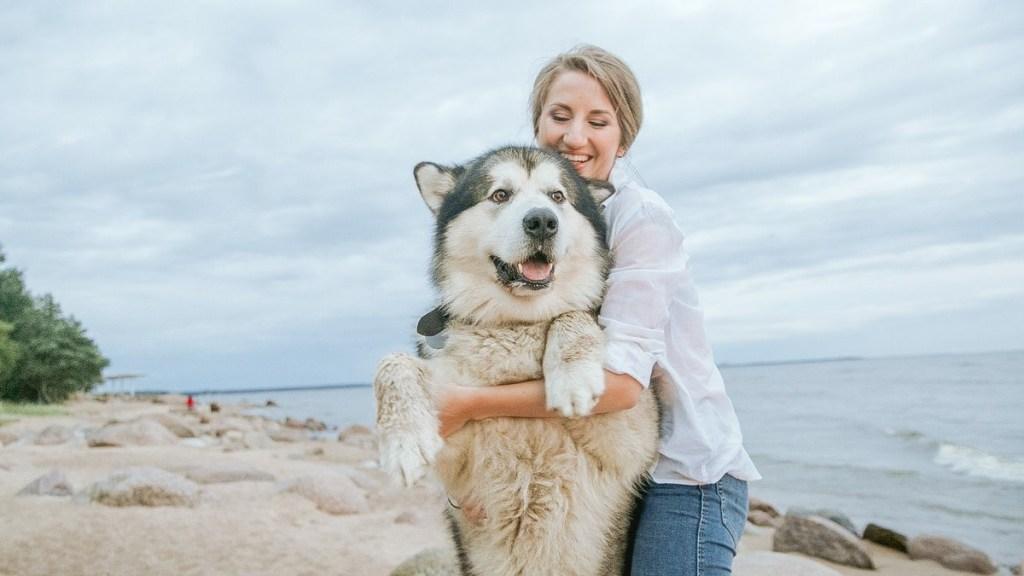 señales de que tu perro se está convirtiendo en un perrhijo malcriado
