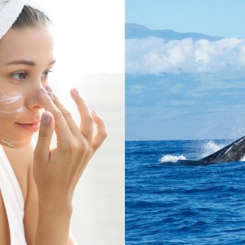 las cremas para el rostro tienen semen de ballena explicacion
